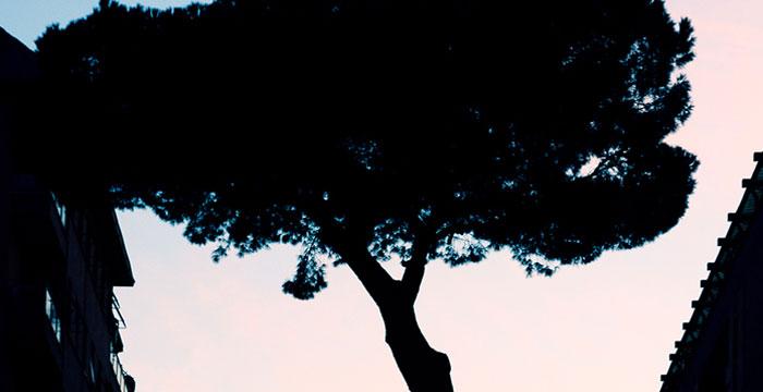 Gli alberi nei condomini