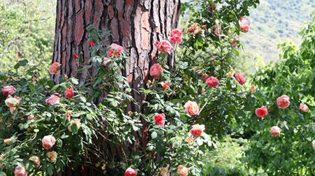 alberi-urbani-home-04