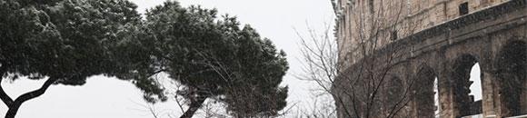 home-alberi-in-citta